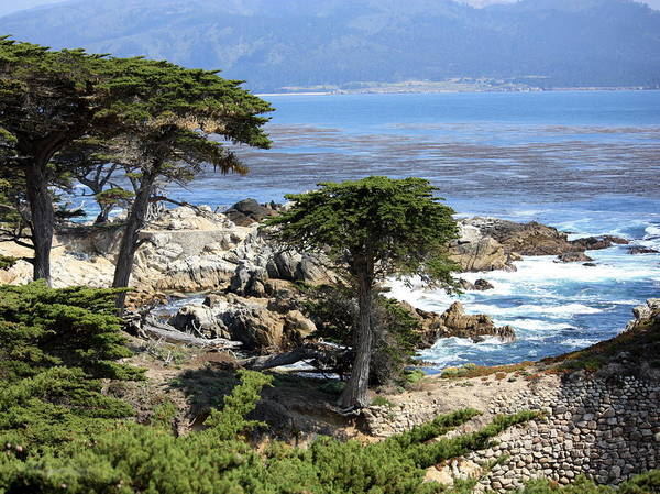 California Poster featuring the photograph Carmel Seaside With Cypresses by Carol Groenen