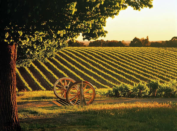 Horizontal Poster featuring the photograph Cart Wheels At Barossa Valley Vineyard, South Australia by Peter Walton Photography