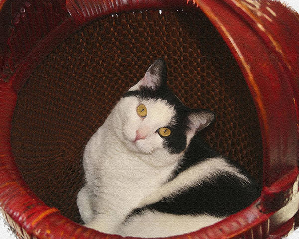 Cat Poster featuring the photograph Cat In A Basket by Margie Wildblood