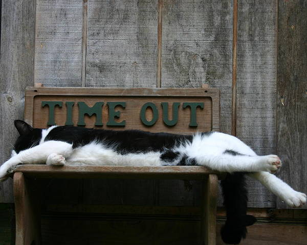 Cat 2 Poster featuring the photograph Cat Time Out by Kevin Dunham