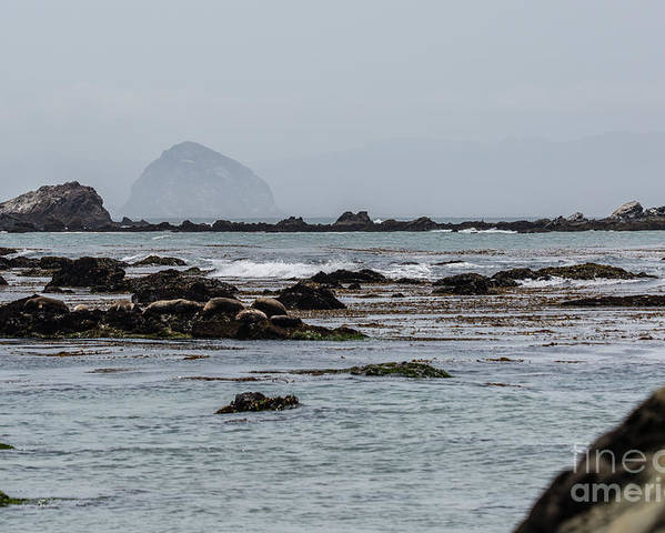 Morro Bay Poster featuring the photograph Cayucos Coast B3930 by Stephen Parker