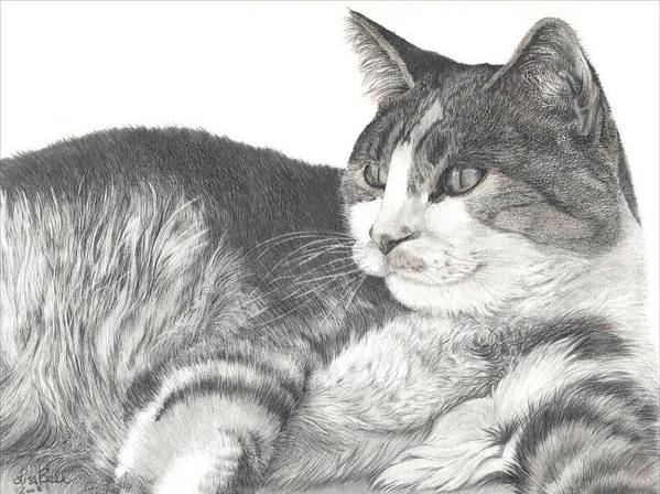 Cats Poster featuring the drawing Chance by Lisa Bell