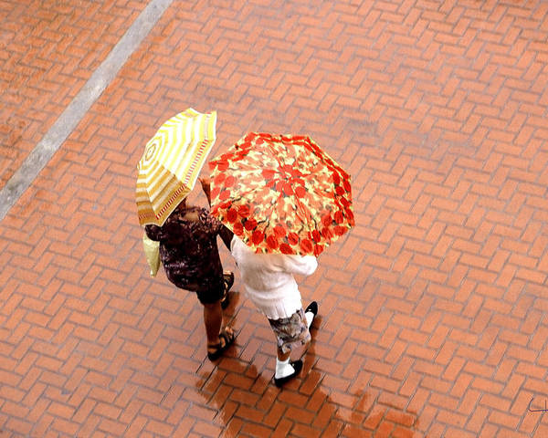 Rain Poster featuring the photograph Chatting In The Rain - Umbrellas Series 1 by Carlos Alvim