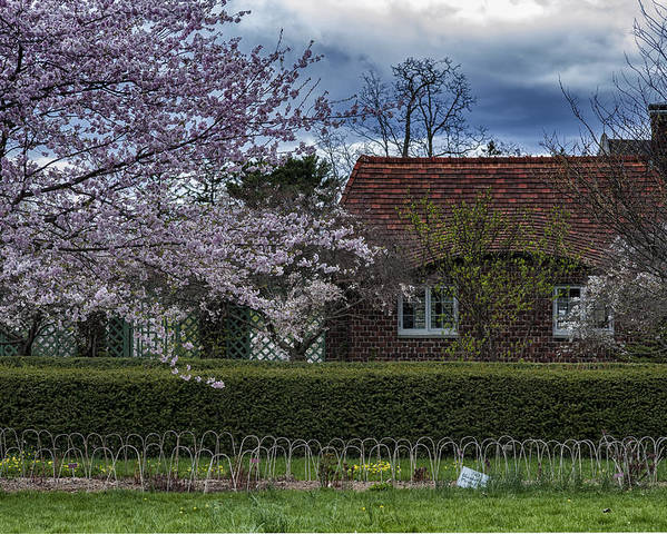 Spring Poster featuring the photograph Cherry Blossom Time by Roni Chastain