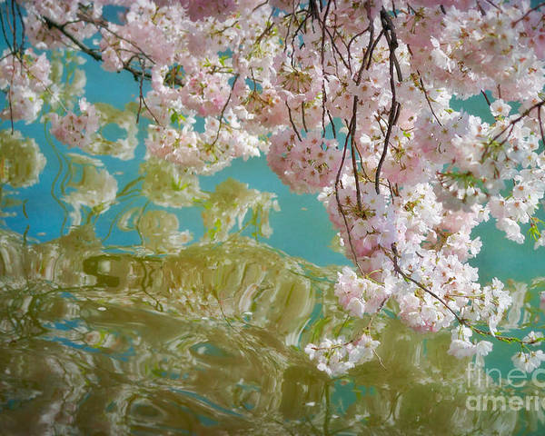 Japanese Poster featuring the photograph Cherry Blossoms Close Up Six by Susan Isakson