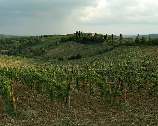 Chianti Poster featuring the photograph Chianti Vineyards In Tuscany by Todd Gipstein
