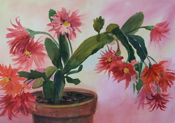 Floral Poster featuring the painting Christmas Cactus by Dianna Willman