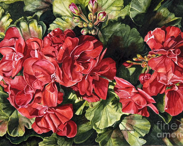 Geranium Poster featuring the painting City Flowers Red Geranium by Helen Shideler