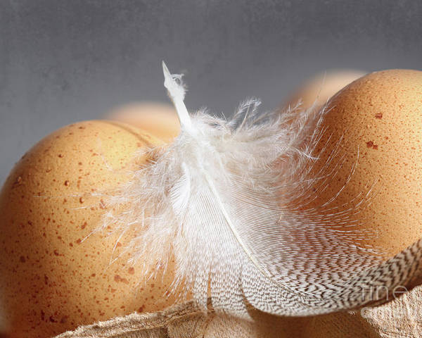 Background Poster featuring the photograph Closeup Of Brown Speckled Eggs by Sandra Cunningham