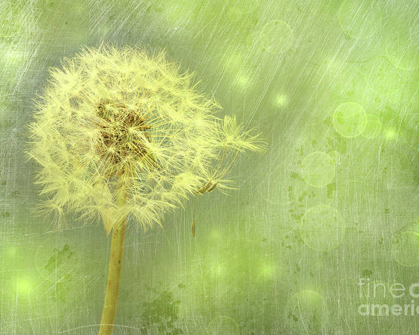 Background Poster featuring the photograph Closeup Of Dandelion With Seeds by Sandra Cunningham