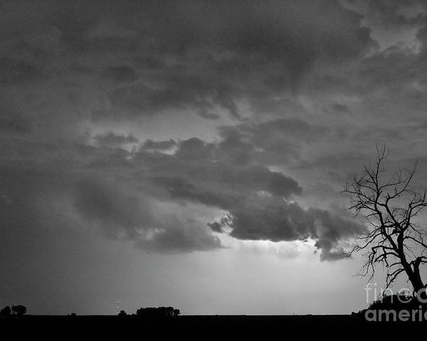 Tree Poster featuring the photograph Co Cloud To Cloud Lightning Thunderstorm 27 Bw by James BO Insogna