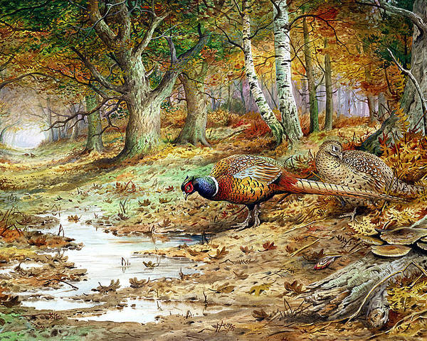 Fungus; Game Bird; Hen Pheasant; Woodland; Feeding; Pool; Forest; Trees Poster featuring the painting Cock Pheasant And Sulphur Tuft Fungi by Carl Donner