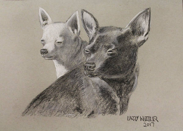 Chihuahua Poster featuring the drawing Coco And Rudy by Larry Whitler