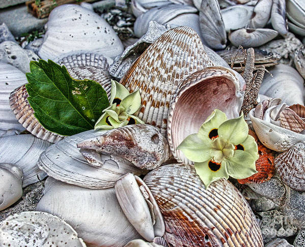 Seashells Seashore Tropical Beach Shells Poster featuring the photograph Collections by Carolyn Staut