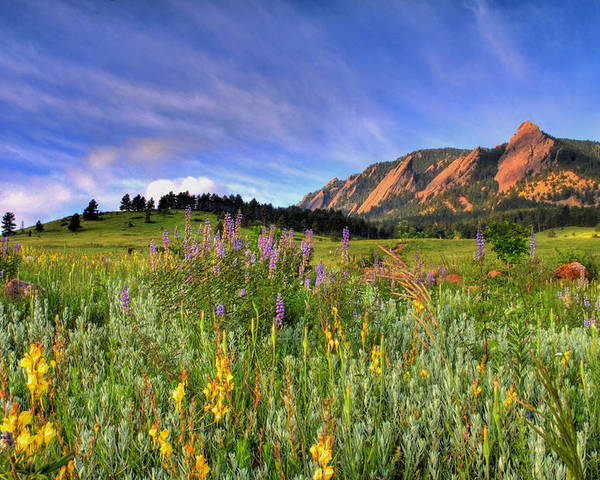 Colorado Poster featuring the photograph Colorado Wildflowers by Scott Mahon