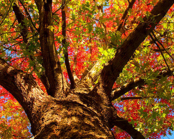 Forest Poster featuring the photograph Colorful Autumn Abstract by James BO Insogna