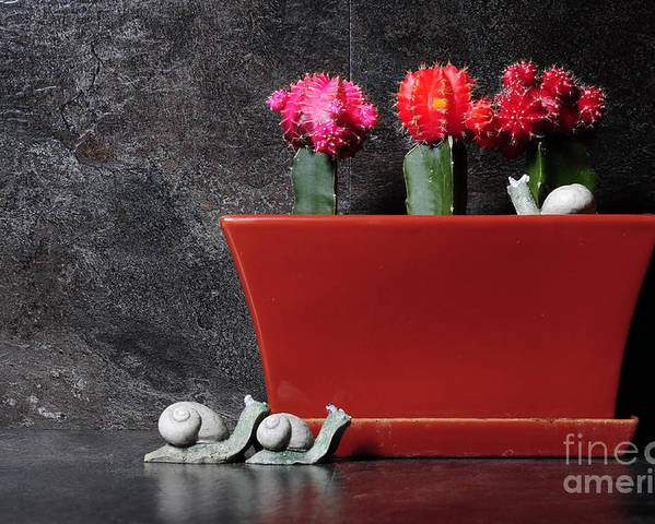 Still Life Poster featuring the photograph Colorful Cactus In Terracotta Pot by Milleflore Images