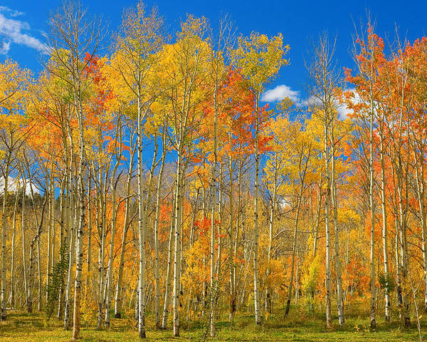 Autumn Poster featuring the photograph Colorful Colorado Autumn Landscape by James BO Insogna