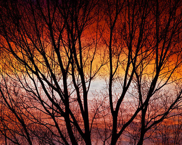 Silhouette Poster featuring the photograph Colorful Tree Branches by James BO Insogna