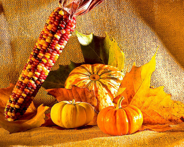 Pumpkins Poster featuring the photograph Colors Of Autumn by Naman Imagery