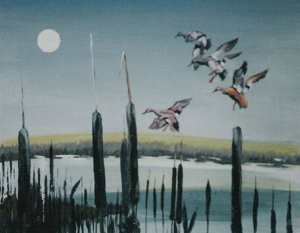 Wildfowl Poster featuring the painting Commin In by Barry Smith