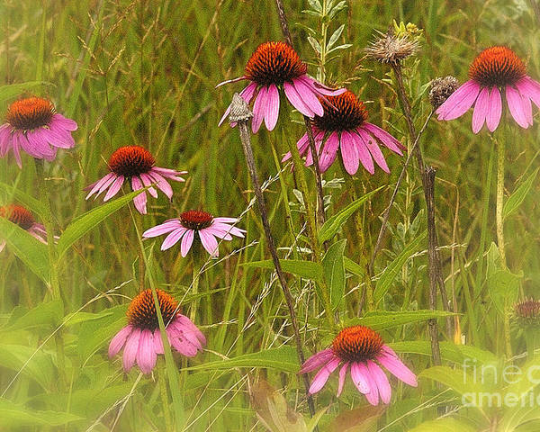 Landscape Poster featuring the photograph Cone Flowers In The Meadow by Neil Doren