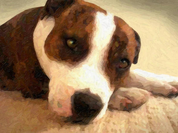 Staffordshire Bull Terrier Poster featuring the painting Contentment by Michael Tompsett