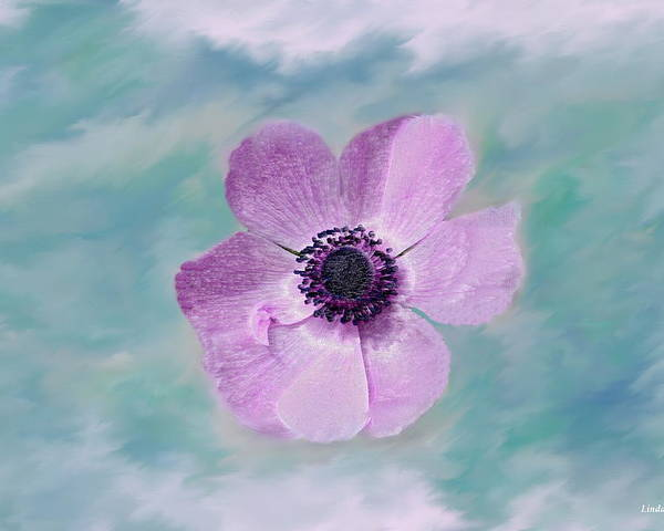 Flowers Floral Macro Nature Gardens Pink Purple Blue Green White Petals Spring Flowers Poster featuring the photograph Cool Spring by Linda Sannuti