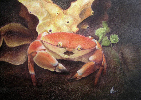 Animals Poster featuring the painting Coral Crab by Adam Johnson
