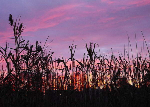 Sunset Poster featuring the photograph Cornfield Sunset by Jack Riordan