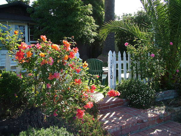 Laguna Cottage Poster featuring the photograph Cottage And Roses by John Loyd Rushing