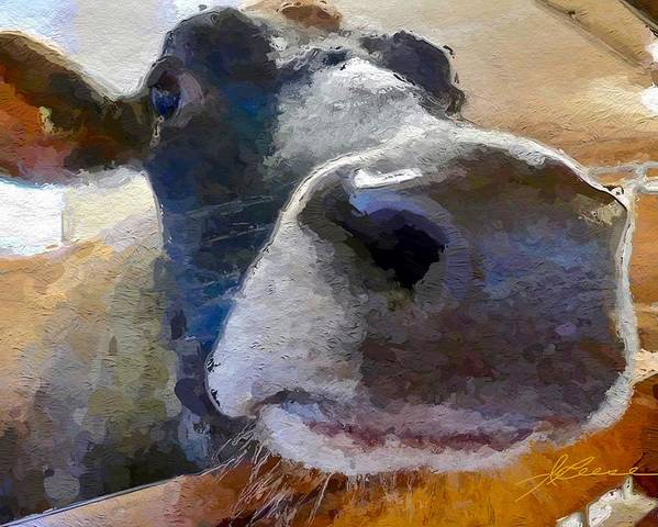 Cow Face Close Up Poster