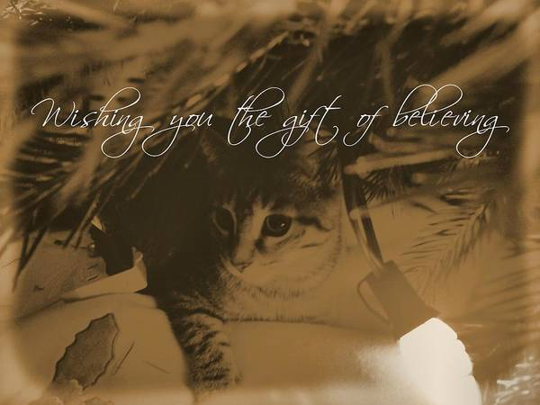Cat Poster featuring the photograph Cozy Spot Quote by JAMART Photography
