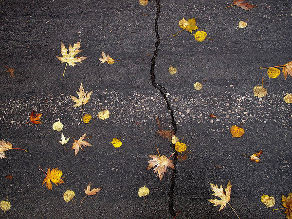 Maple Leaves Poster featuring the photograph Crack 2 by Lyle Crump