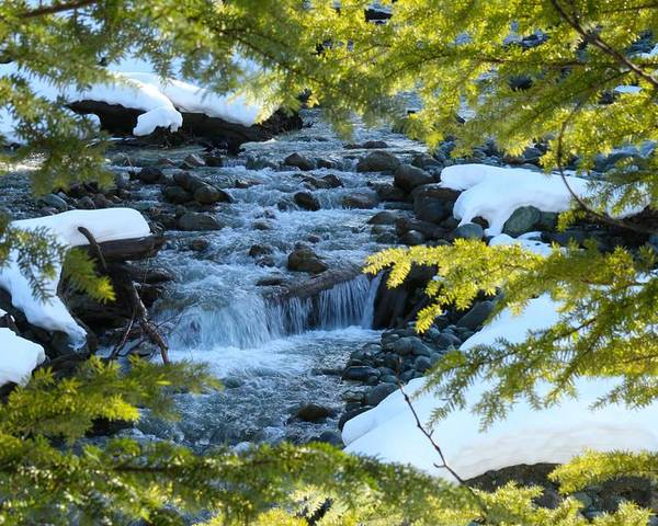 Nature Poster featuring the photograph Creek by Lisa Spero