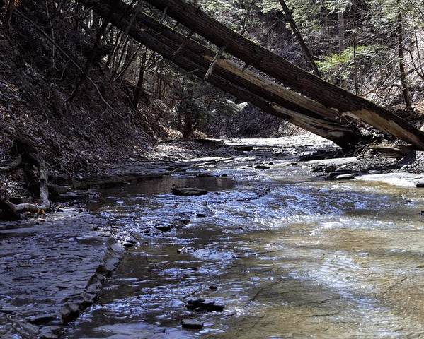 Water Poster featuring the photograph Creekside by Christina McNee-Geiger