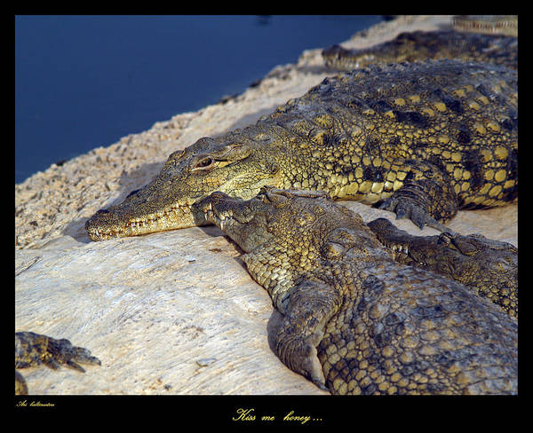 Crocodile Poster featuring the photograph Crocodile by Arik Baltinester