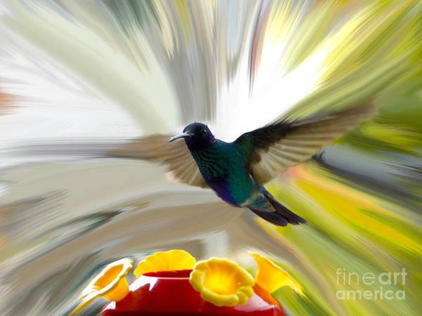 Al Bourassa Poster featuring the photograph Cuenca Hummingbird Series 1 by Al Bourassa
