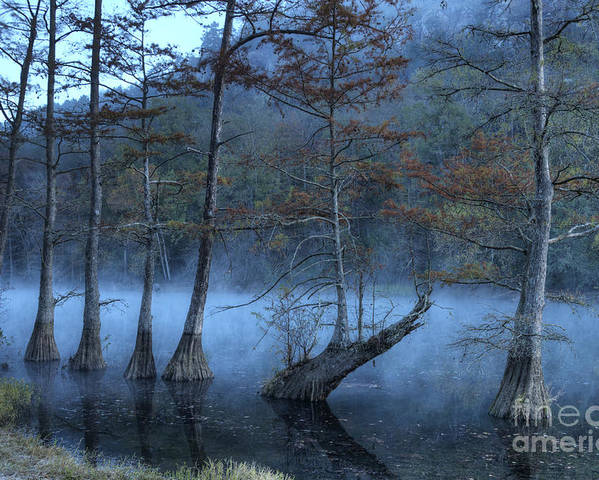 Mist Poster featuring the photograph Cypress Awakening by Tamyra Ayles