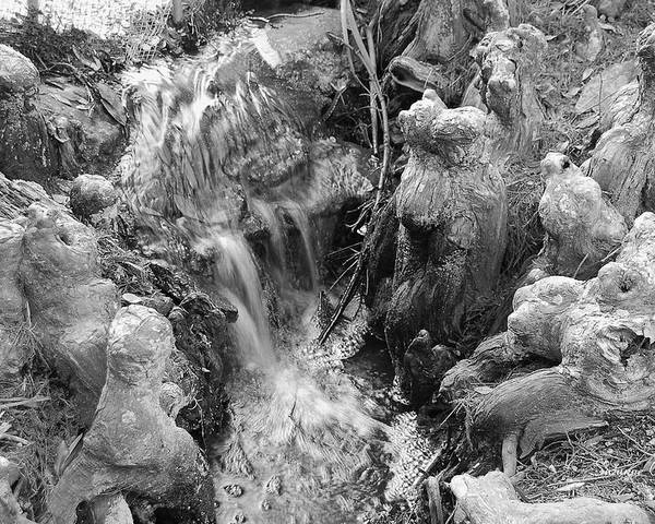 Black And White Poster featuring the photograph Cypress Knees II by Suzanne Gaff