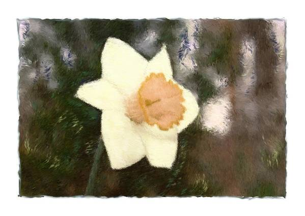 Abstract Poster featuring the photograph Daffodil by Sandy Belk