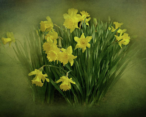 Daffodils Poster featuring the photograph Daffodils by Sandy Keeton