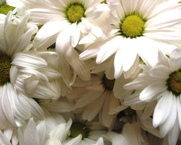 Flowers Poster featuring the photograph Daisies Make Me Smile by Laura Grisham