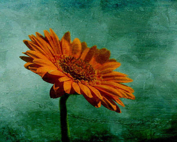 Orange Daisy Poster featuring the photograph Daisy Daisy by Georgia Fowler