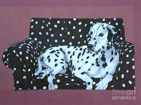 Dog Poster featuring the drawing Dalmatian On A Spotted Couch by Terri Mills