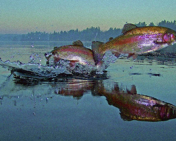 Rainbow Trout Poster featuring the photograph Dance Of The Trout by Brian Pelkey