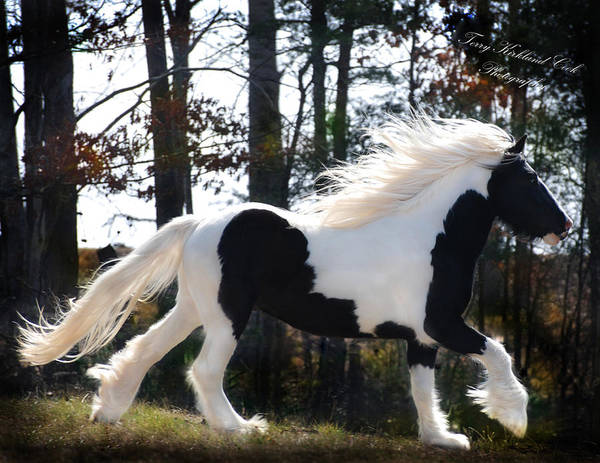 Horse Poster featuring the photograph Dancing In The Light by Terry Kirkland Cook