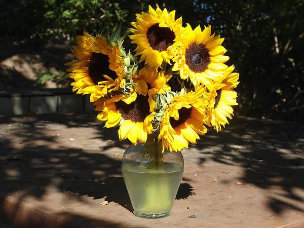 Helianthus Annuus; Common Sunflower; Sunflower; Sunlight; Dappled Sunlight; Sunshine; Sunshine And Shadows; Flower Arrangement; Vase; Garland Texas Poster featuring the photograph Dappled Sunlight by Kala King