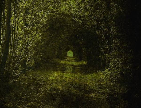 Forest Dark Wood Green Path Way Grass Tree Trees Fairy-tale Wizzard Texture Vintage Poster featuring the photograph Dark Wood by Steve K