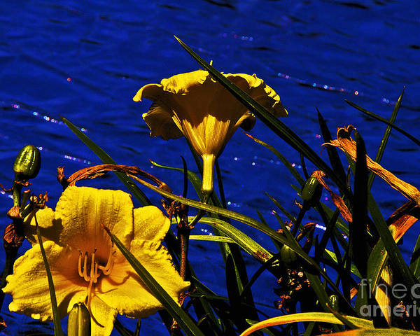 Day Lilies Poster featuring the photograph Day Lilies By The Water by David Frederick